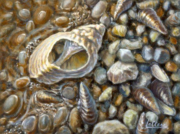L'art du coquillage