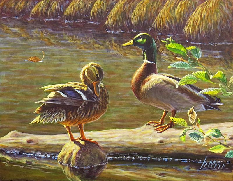 Canard Colvert-Art