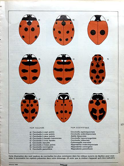COCCINELLES-9 espèces