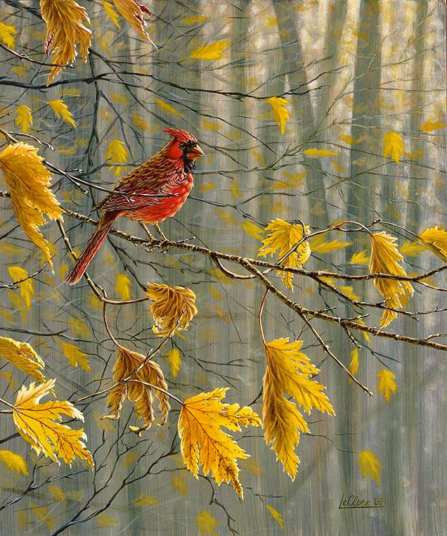 Cardinal rouge à l'automne