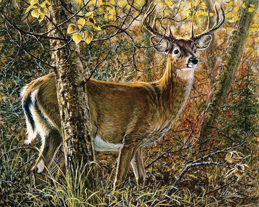 Cerf de Virginie à l'automne