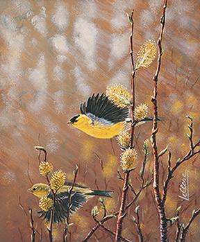 Chardonneret - Finch